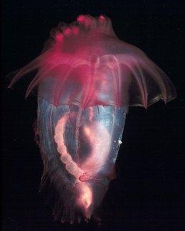 jellyfishflower2